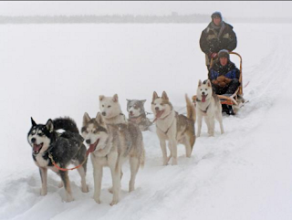 A Lapland adventure to cite winning out a husky pack