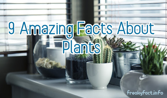 9 Amazing Fact About Plant