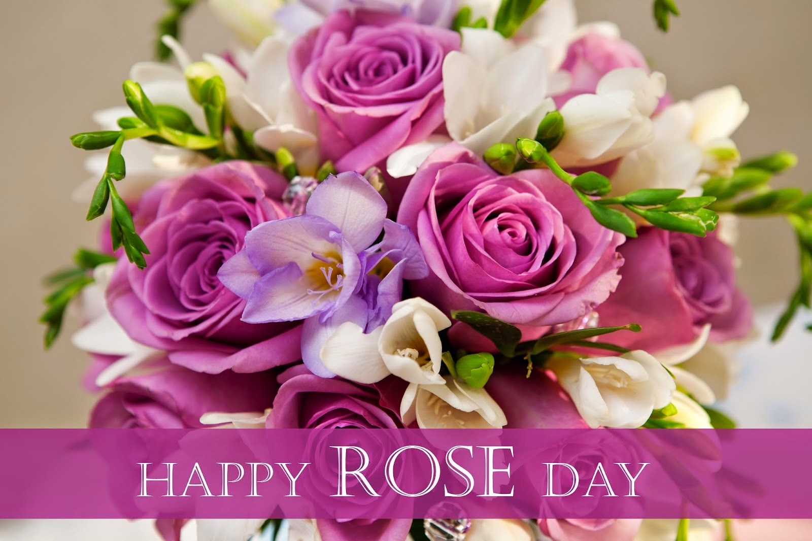 happy rose day 2016
