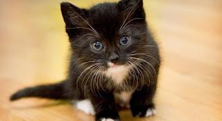 Игра про черного котенка