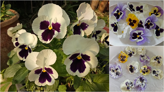 Candied pansies