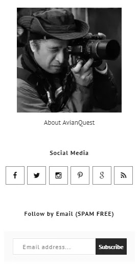 AvianQuest.Com New Minimalist Template Sidebar  Navigation and Social Media Features & RSS