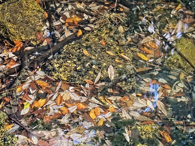 Fallen leaves, mostly yellow and light brown, between roots and rubble on the floor of the lake