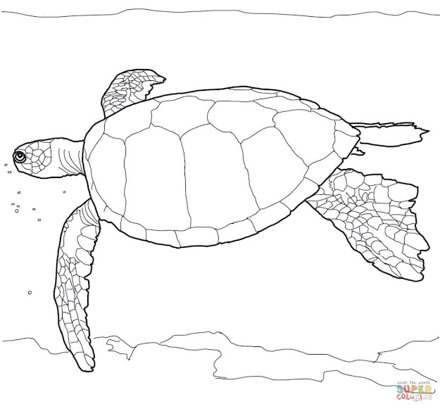 Click The Hawaiian Green Sea Turtle Coloring Pages