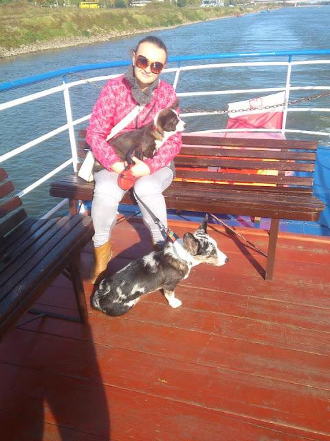 na statku z psem, rejs po wiśle, sandomierz, podróże z psem, w podróży z psem, biba, yuma, cardimania