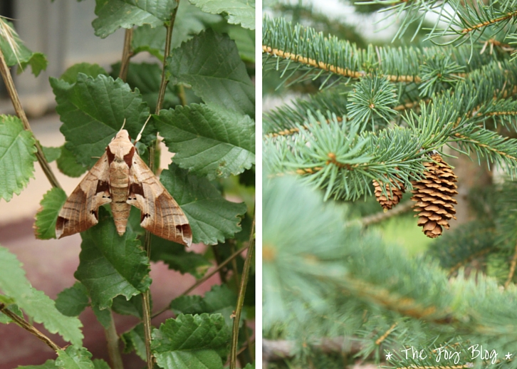 Moth & Pinecones // Independence Day in Small Town America // WWW.THEJOYBLOG.NET