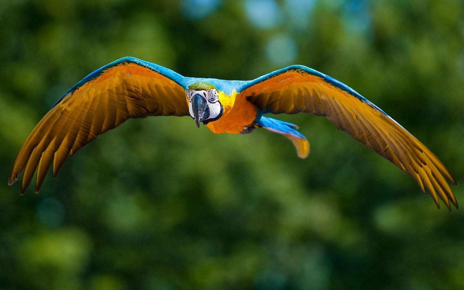 Wallpapers Macaw Bird Wallpapers