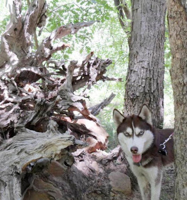 Satisfy your dog's primal cravings with Wild Pursuit by Natural Balance