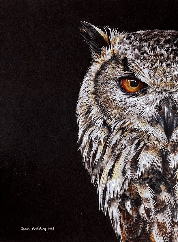02-Eagle-Owl-Sarah-Stribbling-A-Wildlife-and-Pet-Portrait-Artist-www-designstack-co