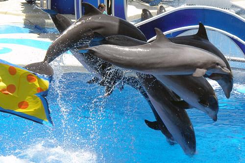 SeaWorld Orlando Show Golfinhos