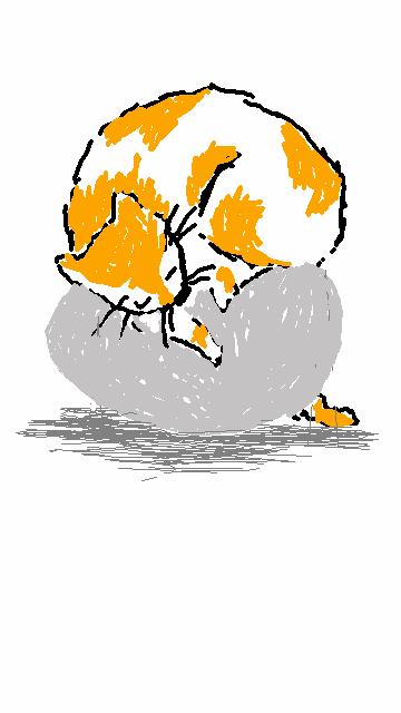 Katze auf Ei , cat on egg