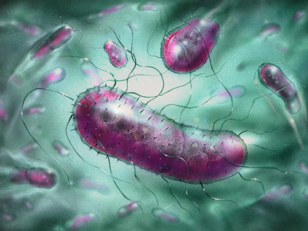 New E Coli Bacteria More Deadlyoutlive your life