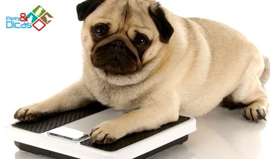 Cão pesando