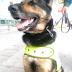 El narco 'ofrece 70.000 dólares por la cabeza de este perro'