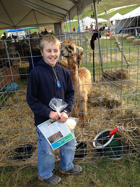 cute alpaca at fair