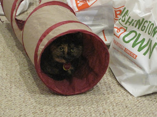 She is in the tunnel. She will stay there all day.