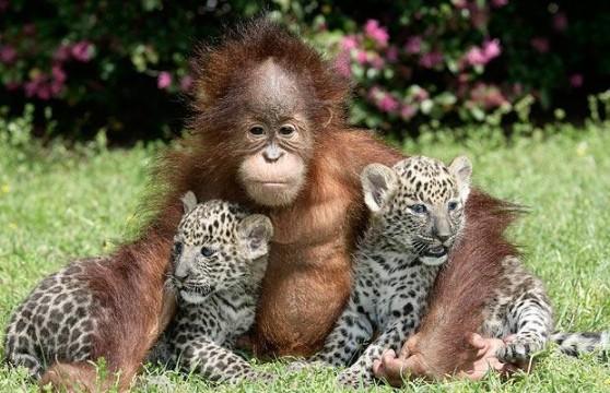 animals planet most beautiful animals. Black Bedroom Furniture Sets. Home Design Ideas