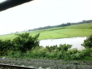 Fields of Bihar