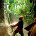 Pemerintah Diminta Bentuk Tim Atasi Illegal Logging di Mimika