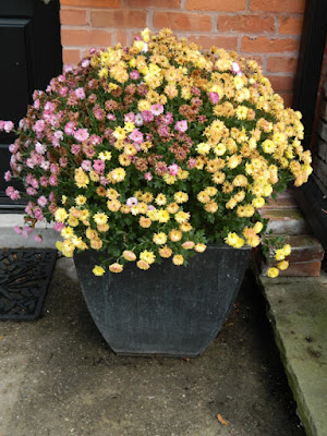 Faded chrysanthemums in container by garden muses-not another Toronto gardening blog