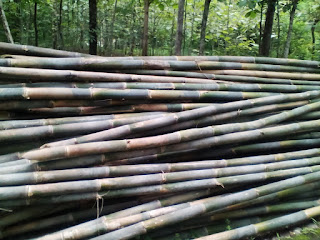 Jual Bambu Apus Area Solo Sragen Murah