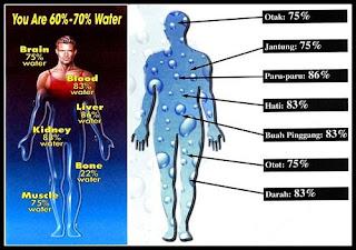 Tubuh Membutuhkan air yang bersifat alkali