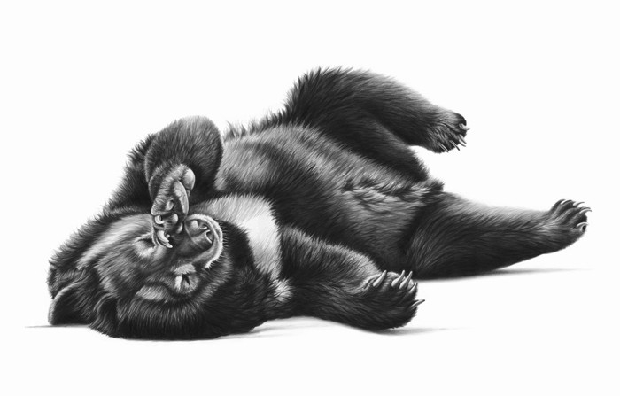 09-Jasper-the-Black-Bear-Richard-Symonds-Wildlife-Fine-Art-Drawings-a-Painting-and-a-Video-www-designstack-co