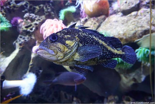 New England Aquarium: Olympic Coast Santuary