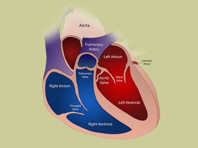 Obat alami penyakit jantung