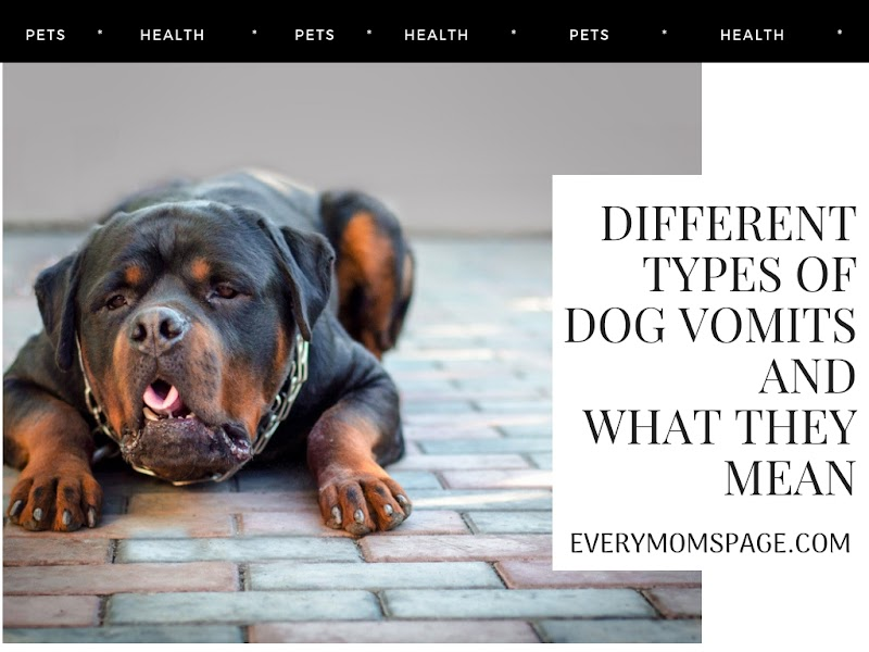 Different Types Of Dog Vomits And What They Mean