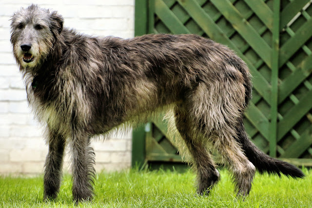 10 of the Most Unusual Dog Breeds