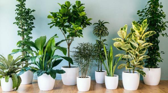Plantas de Interiores de casas u oficinas