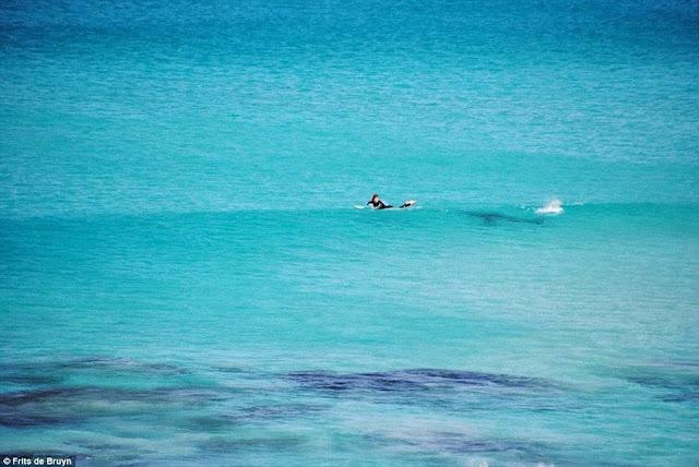 surfistas perseguido por tiburon 02