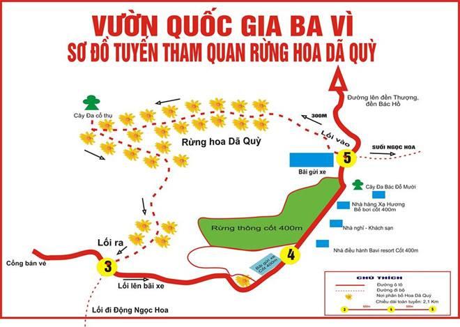 Bản đồ vị trí có nhiều hoa dã quỳ vàng