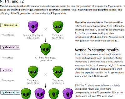 example of Mendel's theory on genetics