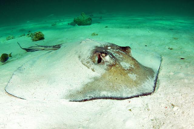 Gibbs Cay, Turks and Caicos Islands