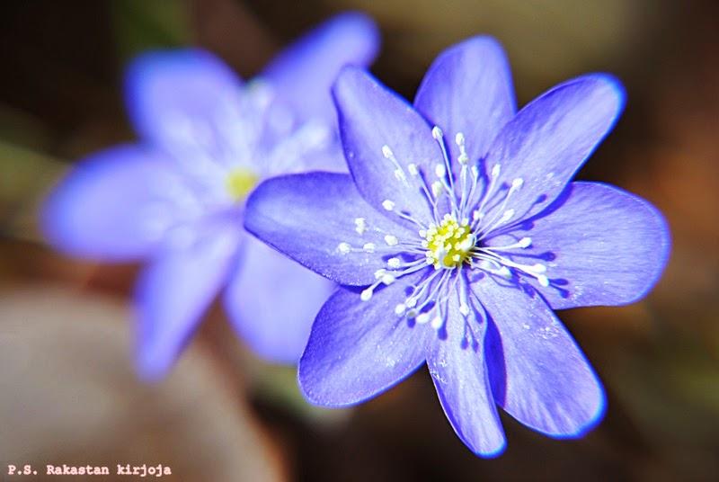 Kevätkuva