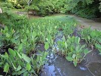 山田池公園のスイレン池付近