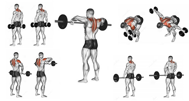 Trapezius Exercises To Help You Build Stunning Back ...