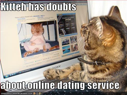 internet dating video cats