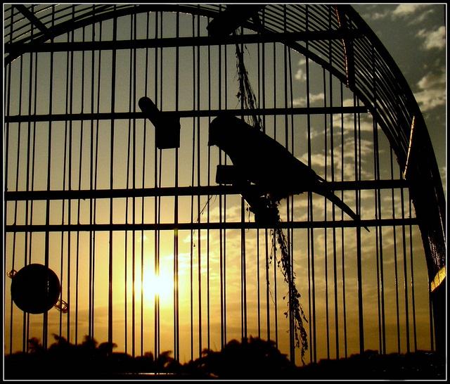 Resultado de imagem para imagem pássaro em gaiolas