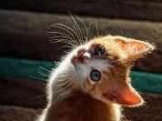 5 Fakta Kucing yang Tidak Diketahui Semua Orang
