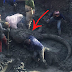 These Farmers Thought That They Hit Something Underground Until They Found Out That This Was A Woolly Mammoth!