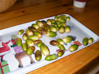 tray of acorns as collected by kid