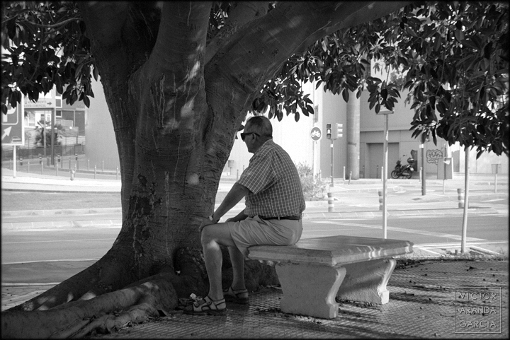fotografia,el_palmar,retrato,banco,arbol,naturaleza,arriba_extraña,