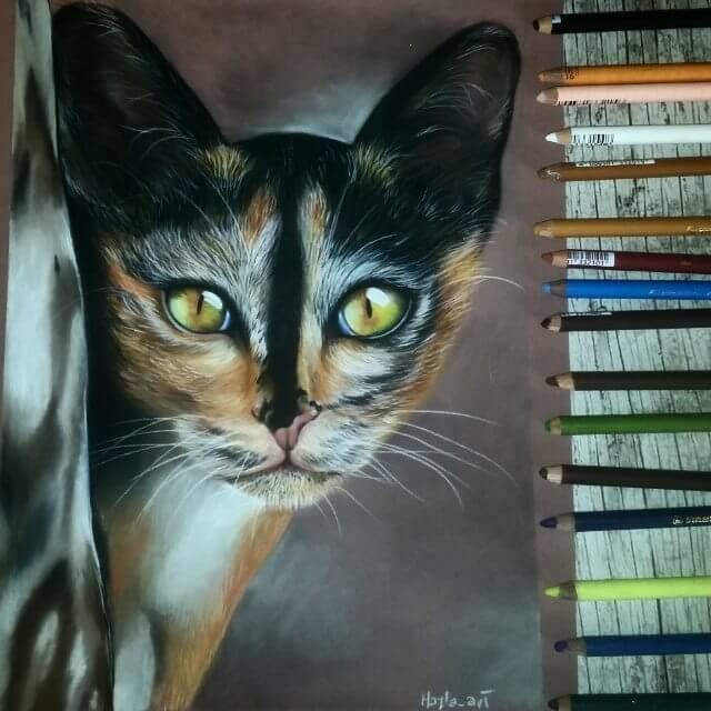 02-Cat-Majla-Colorful-Precise-and-Realistic-Animal-Drawings-www-designstack-co