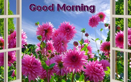 Beautiful Good Morning Flowers