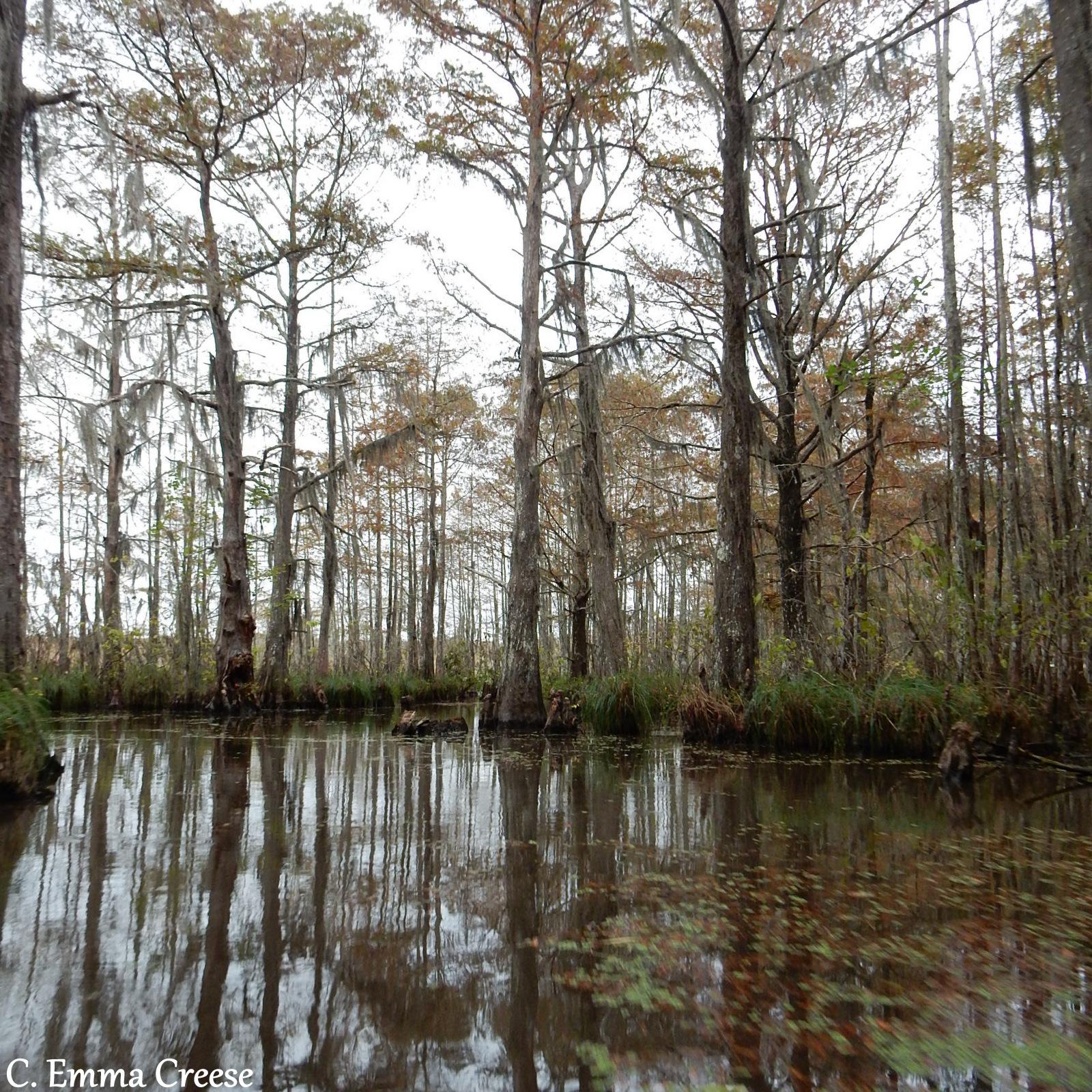 Alligator Bayou Tours Closed