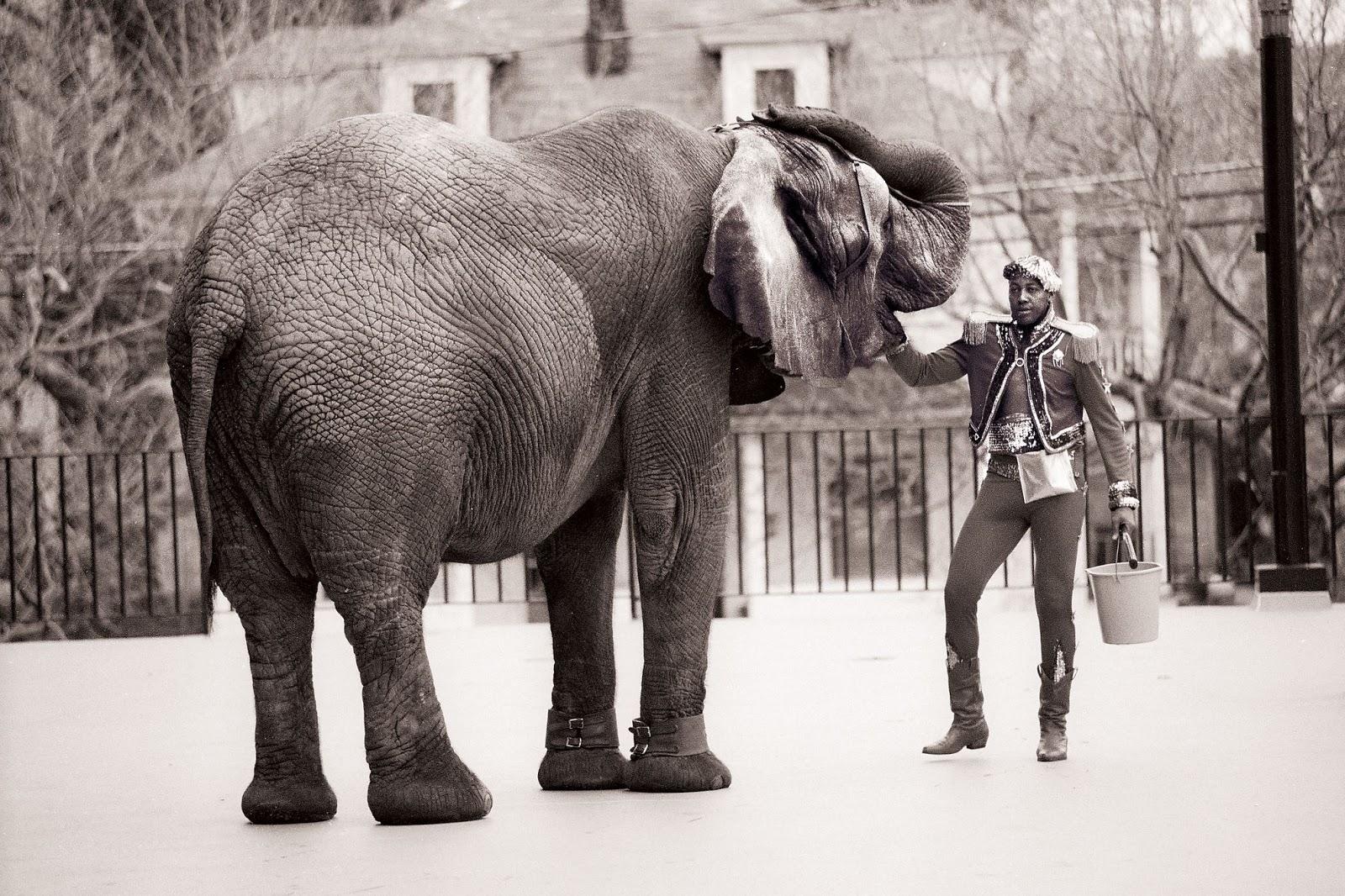 Tyke Elefant