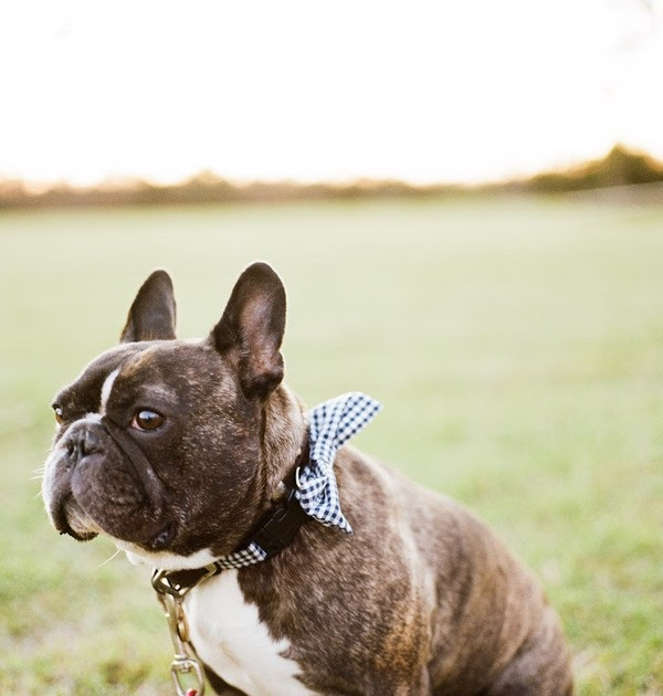 Lil Hoot: Frenchie Friday: Handsome Devil